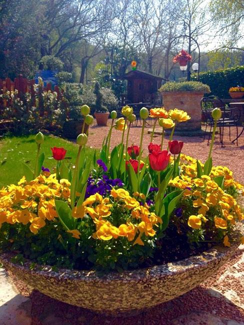 Tulipani del nostro giardino